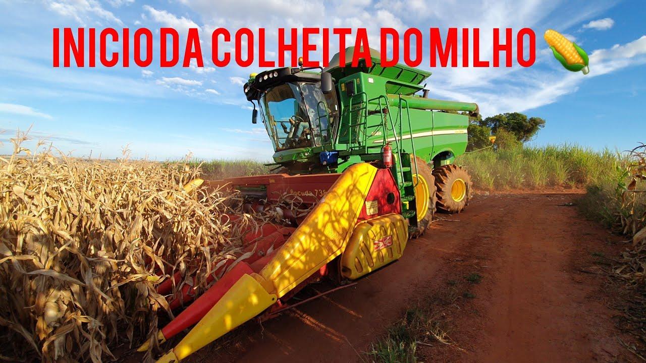 inicio da colheita do milho safrinha🌽