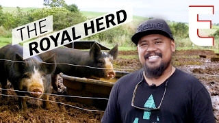 Hawaii's Chillest Pig Farm Produces Perfect, Happy Pork — Cooking in America