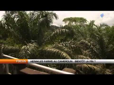 Herakles Farms Bientôt la fin au Cameroun
