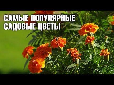 ЦВЕТЫ: ТЮЛЬПАНЫ. Tulip flower