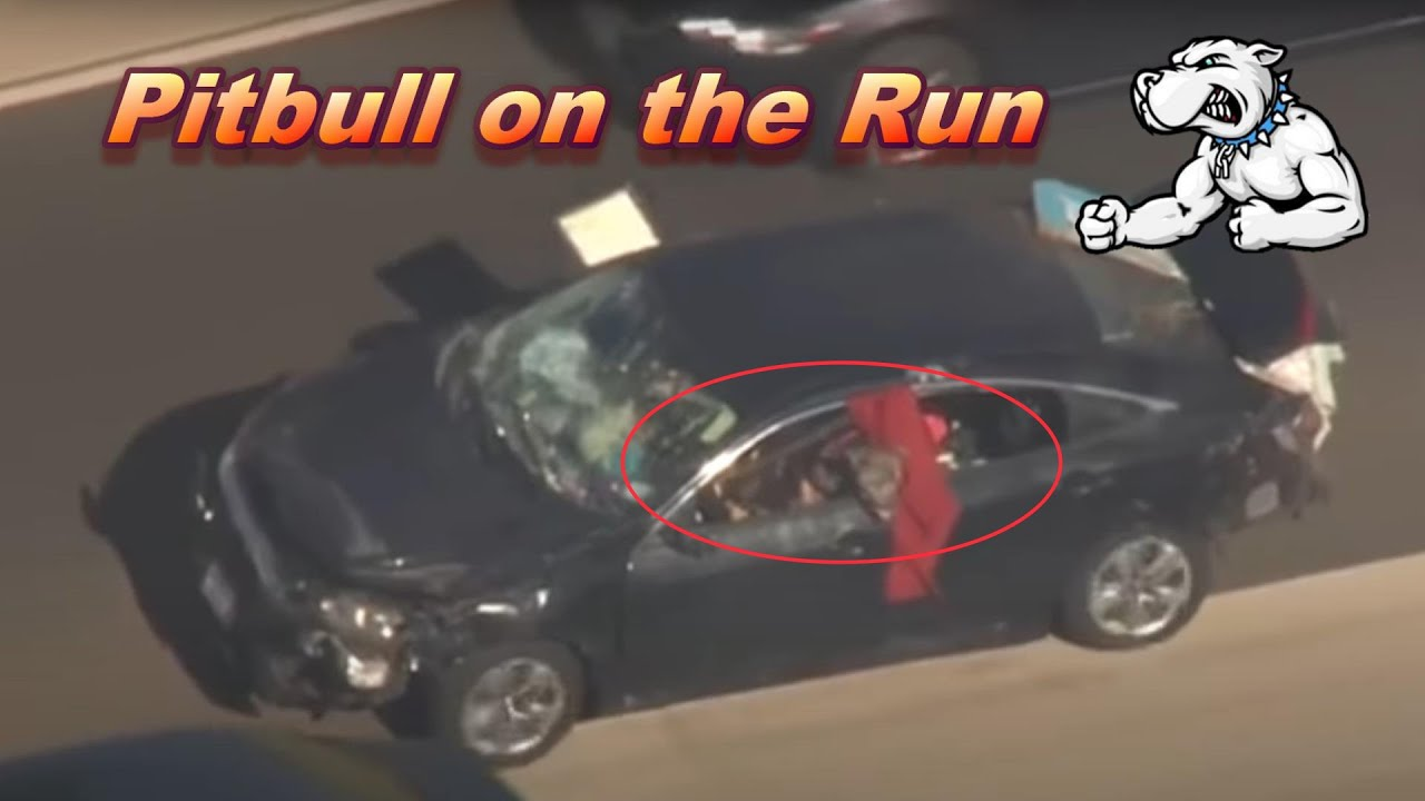 Driver Leads Pursuit With PitBull Hanging Out Front Window - August 3, 2021