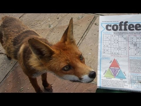 BBC Fox Wars 2013 Documentary (High Quality)
