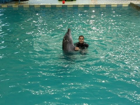 bahrain dolphin show with trainer ahmed najib