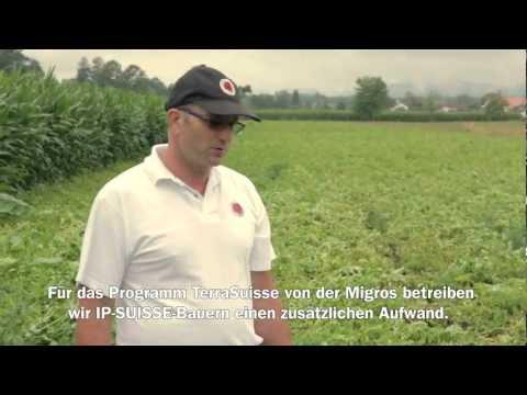 Migros Interview: TerraSuisse Kartoffelanbau