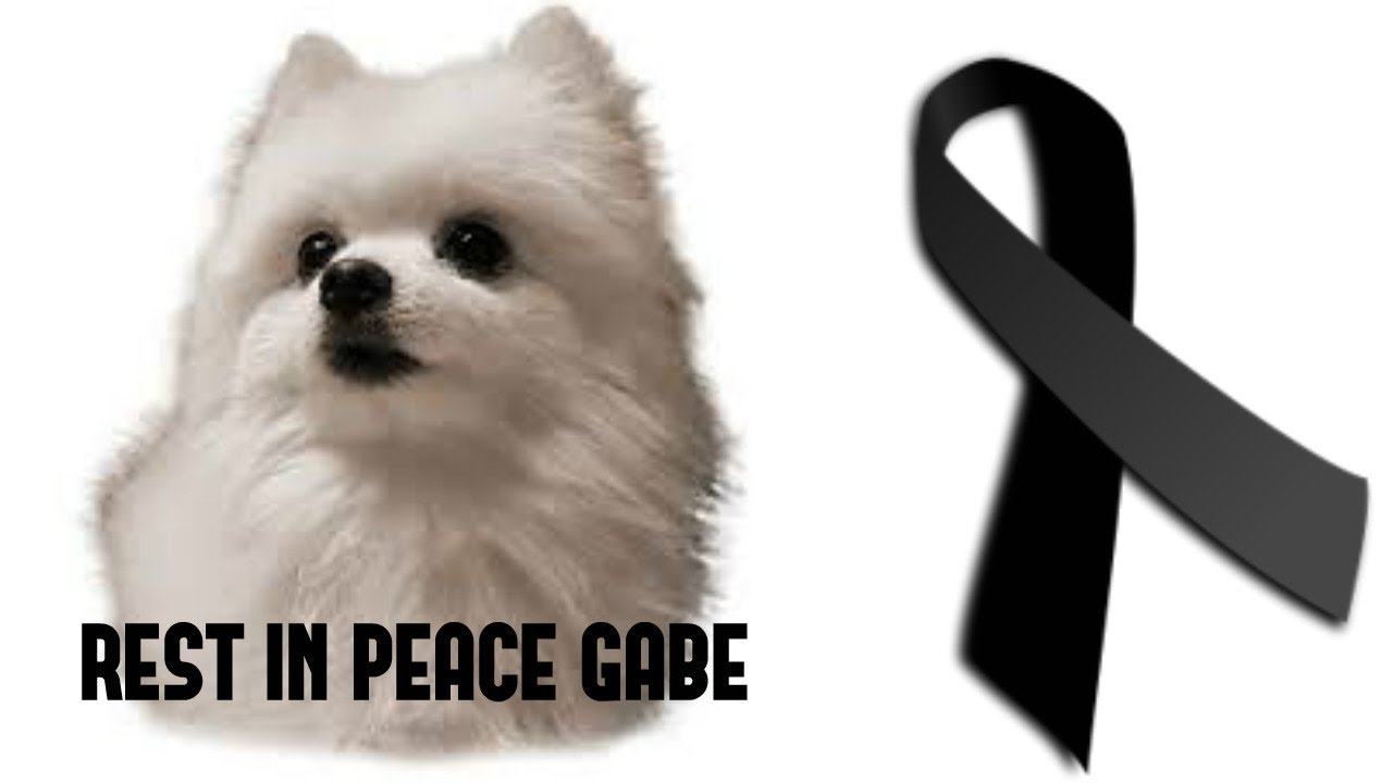 Download Tribute to Gabe The Dog -  HALLELUJAH Song (Rest In Peace) R.I.P.