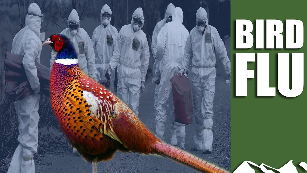 how to catch bird flu