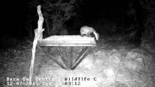 Badger vs Bird Table