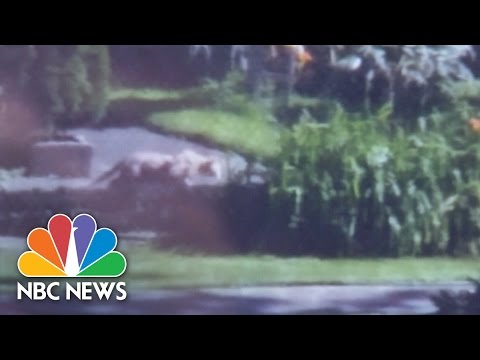 Lion Possibly Loose In Milwaukee, Wisconsin | Short Take | NBC News