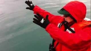 Sea Lion dance attracts intelligent Steller sea lion (Northern Sea Lions) Coastal Alaska 2012