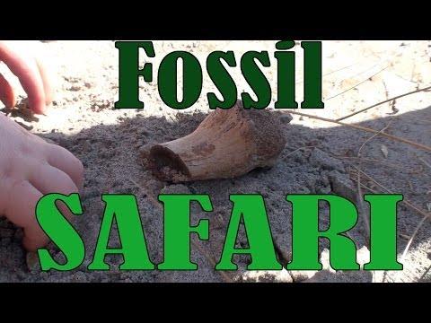 Fossil Safari - Dinosaur Provincial Park, the Badlands of Alberta: a Video Tour