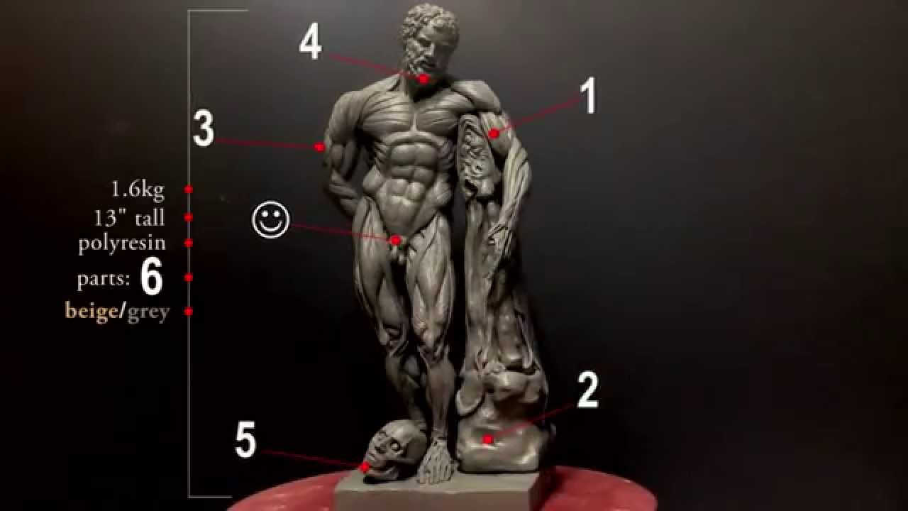 Highly Detailed Anatomy Reference Model - Indiegogo campaign - YouTube