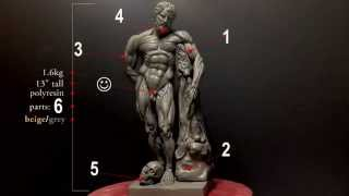 Highly Detailed Anatomy Reference Model - Indiegogo campaign
