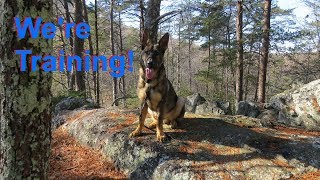Dog Training Made Easy - Get out with your leash