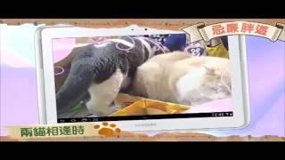 第4集—兩貓相逢時 Thumbnail