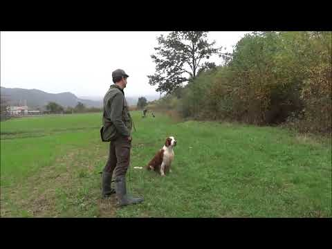 Elfin -Steadiness During Driven Shooting On Ducks