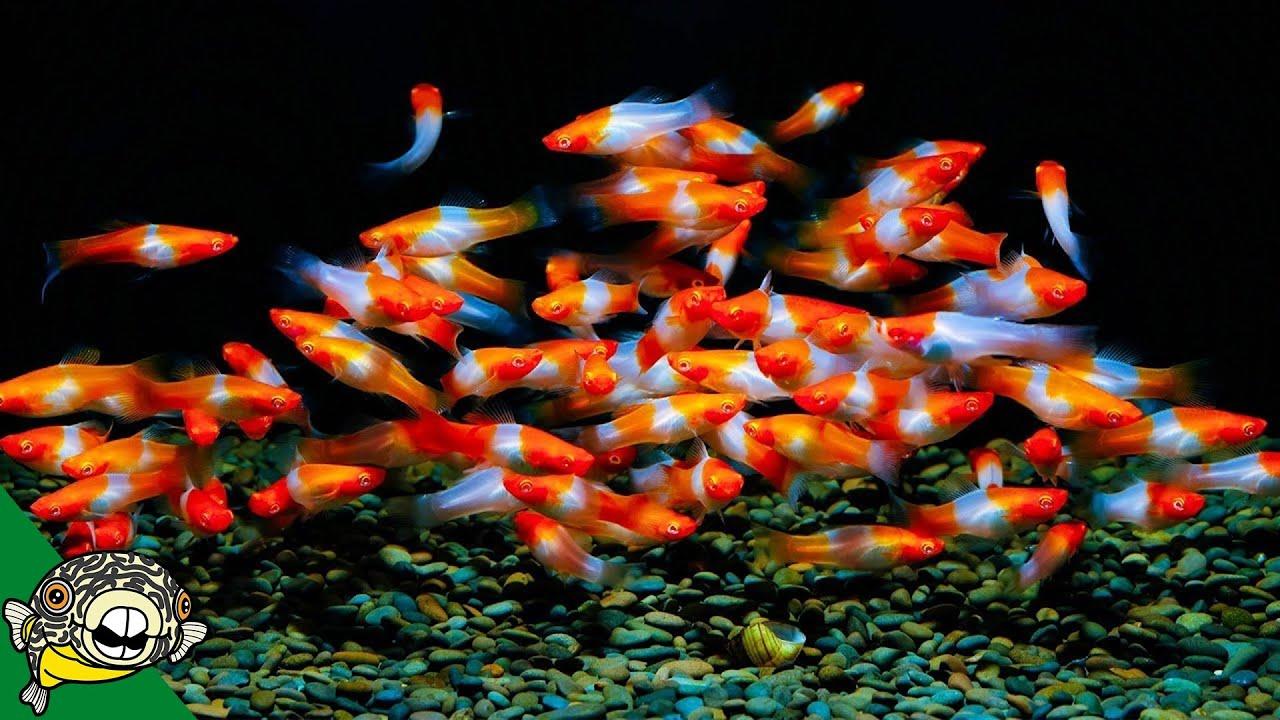 you-won-t-believe-this-place-isn-t-heaven-german-fish-wholesaler