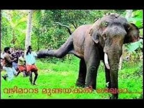 Kerala elephant attack youtube - photo#29
