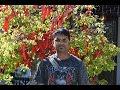Chinese Garden Dunedin New Zealand Deepak VLogs