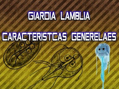 Giardia lamblia Características Generales