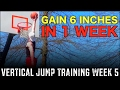 Vertical Jump Training Week 5: Gain 6 Inches In 1 Week