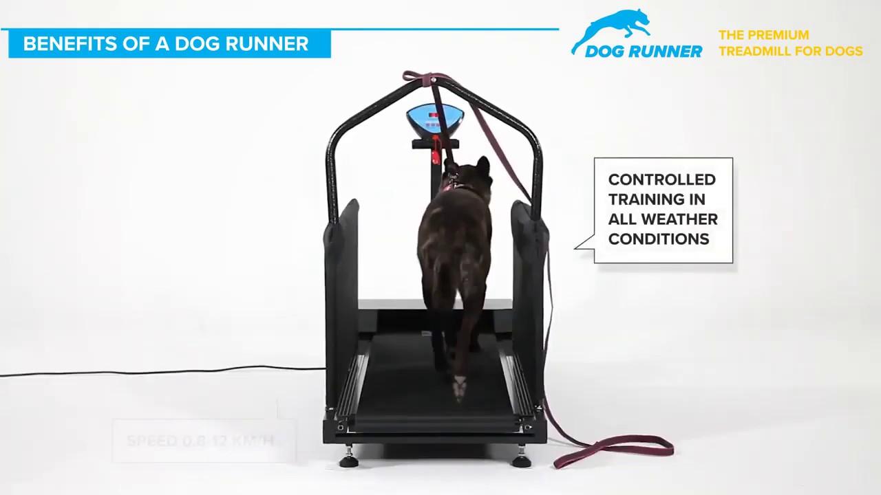 tapis de course pour chien sportif dog runner large