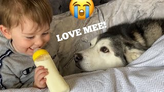 Husky Steals Babies Bed But Fall Asleep Together! [CUTEST VIDEO EVER!]