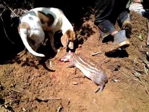 Caceria de Conejo Pintado en algun lugar del planeta