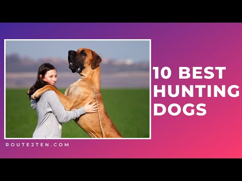 10-hunting-dogs-you-should-take-with-you-for-hunting-||-animal-facts