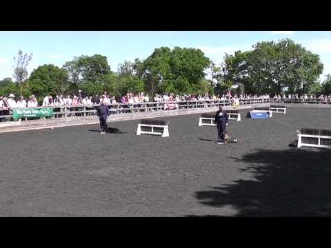 Horses, Hounds & Heroes IV at The Horse Trust Speen, Buckinghamshire 7th June 2015