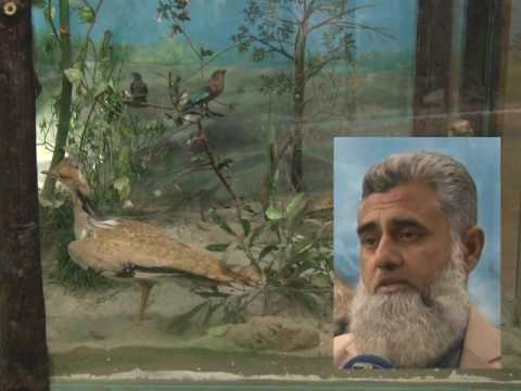 Green Radio Report on Wildlife Museum