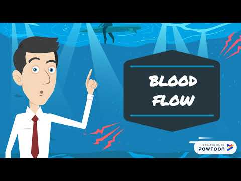 Fish Circulatory System
