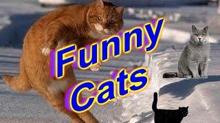Funny Cats 3, Смешные коты 3
