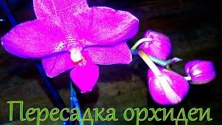 Пересадка орхидеи.Что с корнями?(В этом видео посмотрим, что же случается с корнями орхидеи, если вовремя не пересадить ее. Буду делать вывод..., 2016-05-06T18:37:29.000Z)