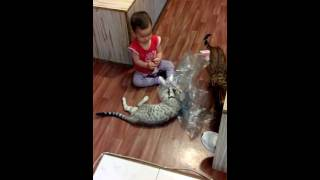 """бенгальская кошка и ребенок - питомник кошек Lantana Fly  - """"Cattery Bengal Cats""""3"""