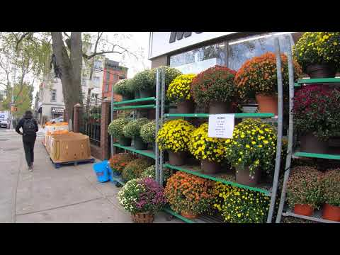 ⁴ᴷ⁶⁰ Walking NYC (Narrated) : Carroll Gardens To IKEA, Red Hook, Brooklyn (October 7, 2019)