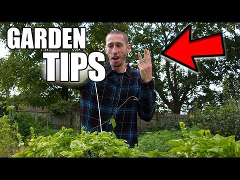 The 3 Most IMPORTANT Garden Tips You NEED TO GROW