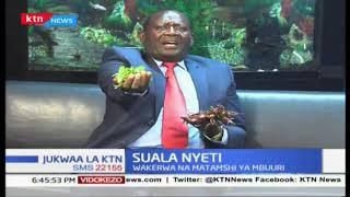 Suala Nyeti: Kilimo cha Muguka (Sehemu ya Pili) |Jukwaa La KTN