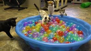 Кошки играют с шариками, приколы с животными для самых маленьких