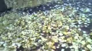 желтые листья 03.11.11