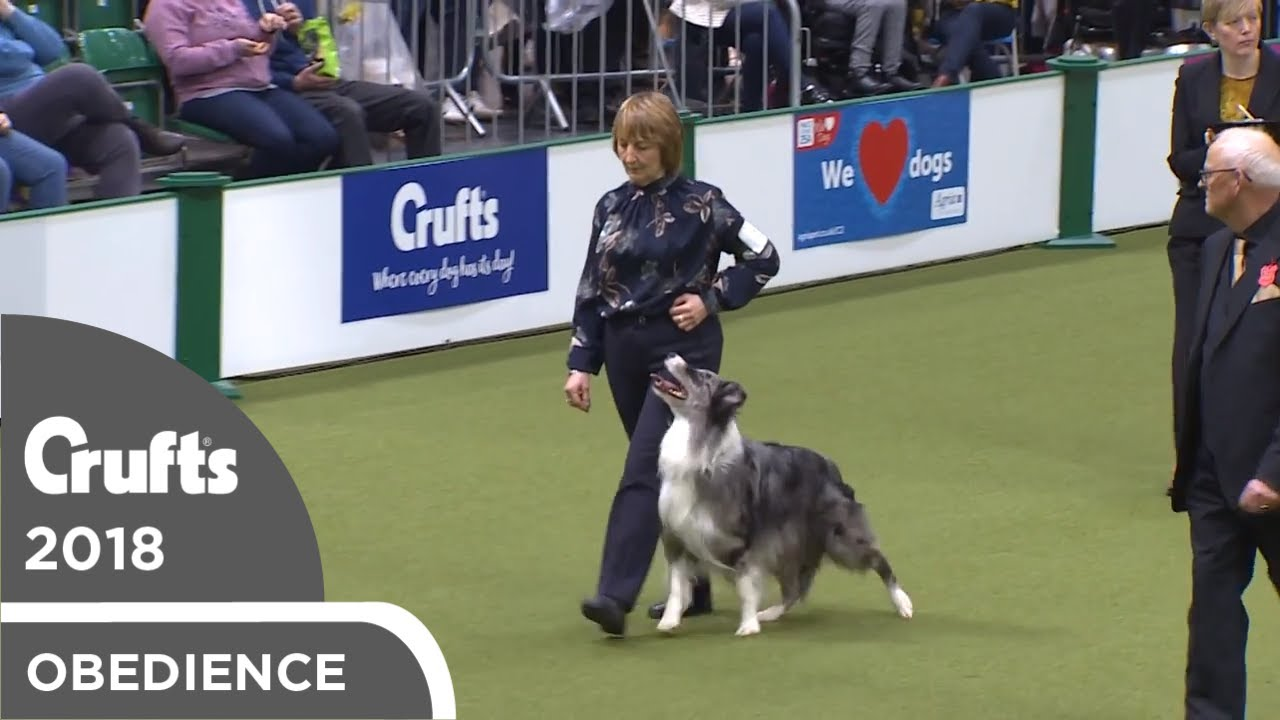 Obedience - Dog Championship - Part 18   Crufts 2018