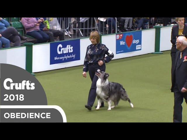 Obedience - Dog Championship - Part 18 | Crufts 2018