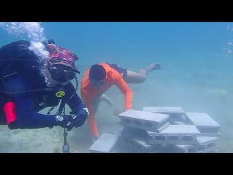 Build a Reef and Reef Monitoring at Laiya Batangas