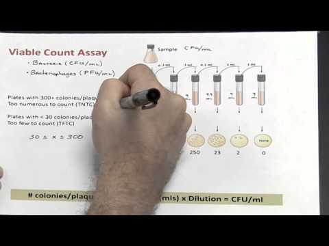 Dilutions - Part 3 of 4 (Calculating Colony Forming Units/ml)