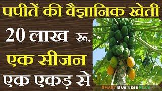 पपीतें की वैज्ञानिक खेती से कमाओ 20 लाख रू एक एकड़ से | papaya farming | Smart Business Plus