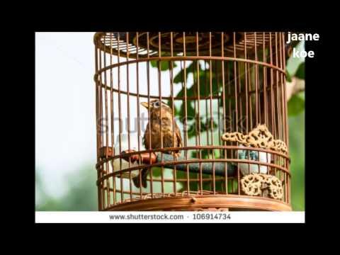 PINJARE KE PANCHHI RE - By Ram Lakhan Prasad