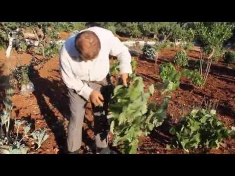 L'ultimo contadino di Puglia