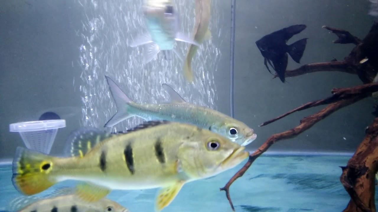 Unduh 81 Gambar Ikan Bulan Bulan HD Gratis