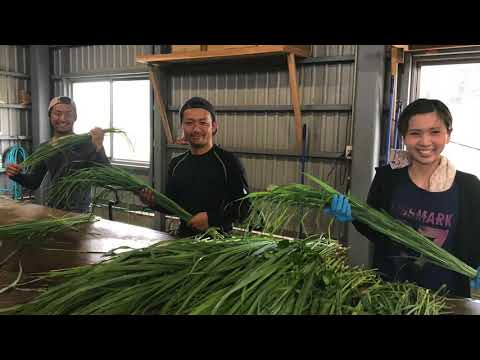 Organic Herb tea Farmer From Japan