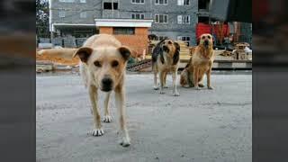 Как приручить собаку на улице?