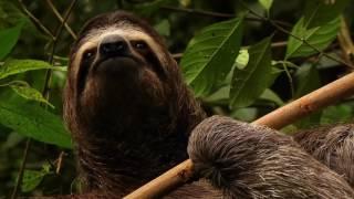 Панама Национальный парк Ла Амистад  Мировое природное наследие